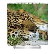 Jaguar Resting Shower Curtain