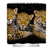 Jaguars Shower Curtain