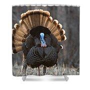 Jake Eastern Wild Turkey Shower Curtain