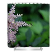 Jammer Astilbe 001 Shower Curtain