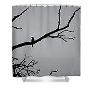 Jammer Bird Silhouette 1 Shower Curtain