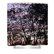 Jammer Cotton Candy Trees Shower Curtain