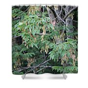 jammer Dripping Seeds Shower Curtain