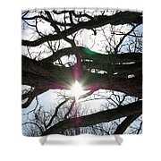 Jammer Lateralus Branching Trees Shower Curtain