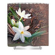 January 2014 Paper-whites In Bloom Shower Curtain