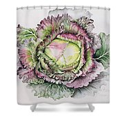 January King Cabbage  Shower Curtain