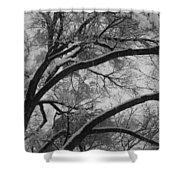 January Tree Shower Curtain