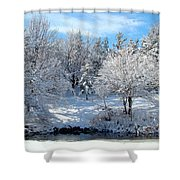 January Trees Shower Curtain
