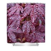 Japanese Acer Palmatum Atropurpurea Shrub Shower Curtain