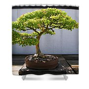 Japanese Bonsai Tree In National Shower Curtain