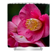 Japanese Camellia-the Official State Flower Of  Alabama Shower Curtain