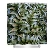 Japanese Ferns Shower Curtain