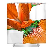 Japanese Iris Orange White Five Shower Curtain