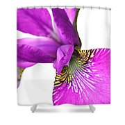 Japanese Iris Violet White Two Shower Curtain