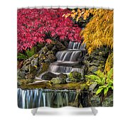 Japanese Laced Leaf Maple Trees In The Fall Shower Curtain