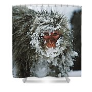Japanese Macaque Covered In Snow Japan Shower Curtain