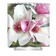 Japanese Magnolia Shower Curtain