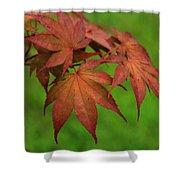 Japanese Maple Autumn Colors Shower Curtain