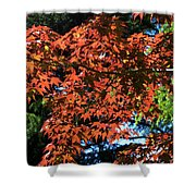 Japanese Maple Canopy Shower Curtain