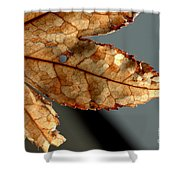 Japanese Maple Leaf Brown - 2 Shower Curtain