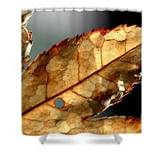 Japanese Maple Leaf Brown - 4 Shower Curtain