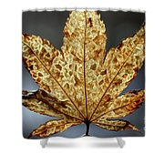 Japanese Maple Leaf Brown - 3 Shower Curtain