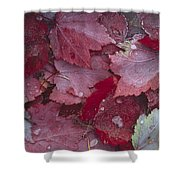 Japanese Maple Leaves With Frost Shower Curtain