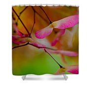 Japanese Maple Seedling Shower Curtain