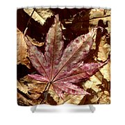 Japanese Maple Tree Leaves Shower Curtain