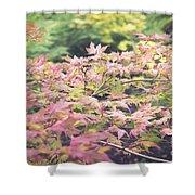 Japanese Maples Shower Curtain