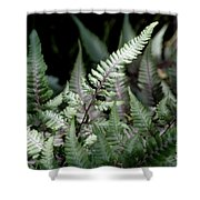 Japanese Painted Fern Shower Curtain