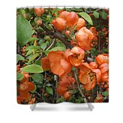 Japanese Quiche Blossoms Shower Curtain