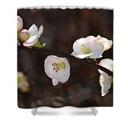 Japanese Quince 2 Shower Curtain