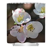 Japanese Quince 4 Shower Curtain