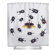 Japanese Rhinoceros Beetle Males Shower Curtain