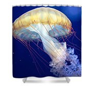 Japanese Sea Nettle Chrysaora Pacifica Shower Curtain