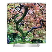 Japanese Tree In Garden Shower Curtain
