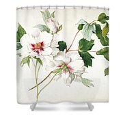 Japanese Tree Peony Shower Curtain by  Lucy Cust