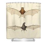 Javanese Bats Shower Curtain