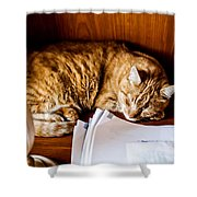 Jc Napping Shower Curtain