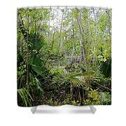 Jean Lafitte National Preserve Swamp Louisiana Shower Curtain