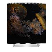 Jelley Fish Shower Curtain