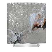 Jelly Ball And Oyster Shell Washed Upon Nc Beach Shower Curtain