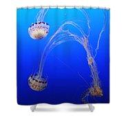 Jellyfish 1 Shower Curtain