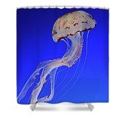 Jellyfish 2 Shower Curtain