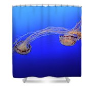 Jellyfish 7 Shower Curtain