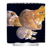 Jellyfish 8 Shower Curtain