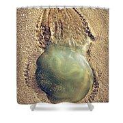 Jellyfish Shower Curtain by Carlos Caetano