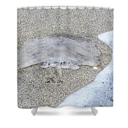 Jellyfish On The Sand Shower Curtain
