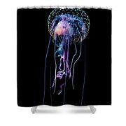 Jellyfish  Pelagia Noctiluca  With Fish Shower Curtain